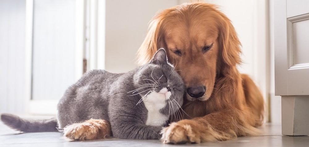 Hlavní změny novely zákona na ochranu zvířat pro chovatele psů a koček