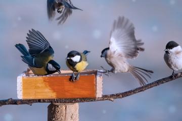 Pomozte ornitologům při výzkumu a zúčastněte se Ptačí hodinky