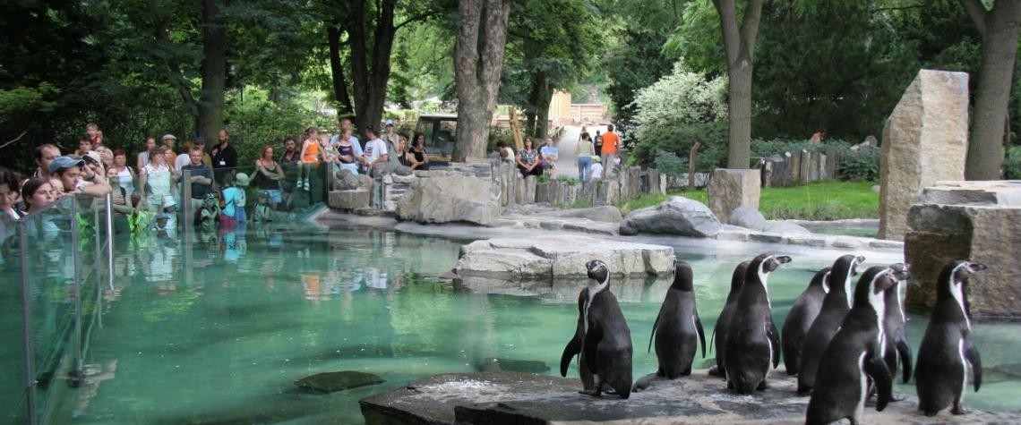 MŽP finančně podpoří zoologické zahrady v nouzi
