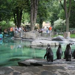 80 milionový příspěvek na krmivo zamíří do zoo, MŽP znovu navyšuje příspěvek pro zoo. Oproti loňsku se zdvojnásobil na 40 milionů. MŽP finančně podpoří zoologické zahrady v nouzi