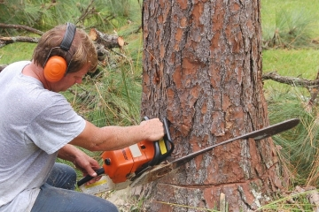 S kácením stromů, pokud je nezbytné, počkejte na pozdní podzim