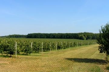 SZIF začal vydávat rozhodnutí k dotacím na produkci ovoce