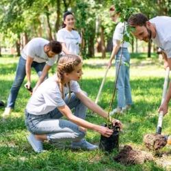 Sázíme budoucnost. Stovky milionů na sázení stromů