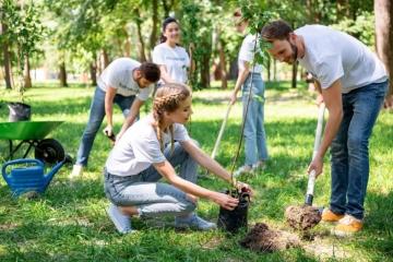 Stát přidá 100 milionů korun na výsadbu stromů ve městech a obcích