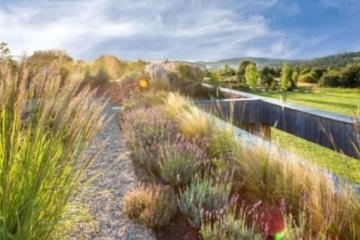 Městská oáza na střeše školy - první místo v soutěži Navrhni projekt získal návrh řešící nedostatek zeleně