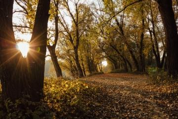 Dny za obnovu lesa: dvě stě akcí po celé republice