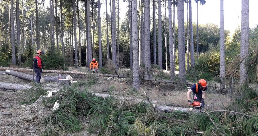 Na území celé republiky začaly intenzivní práce v lesích