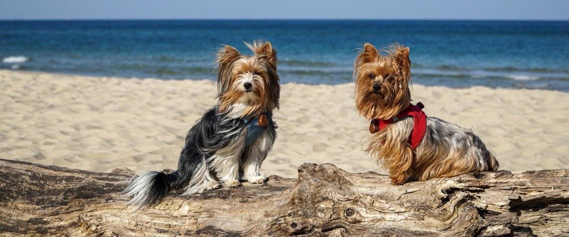 Blíží se doba letních prázdnin a dovolených, jak cestovat se zvířaty do zahraničí