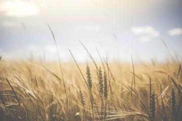 Miroslav Toman schválil přímé platby pro zemědělce